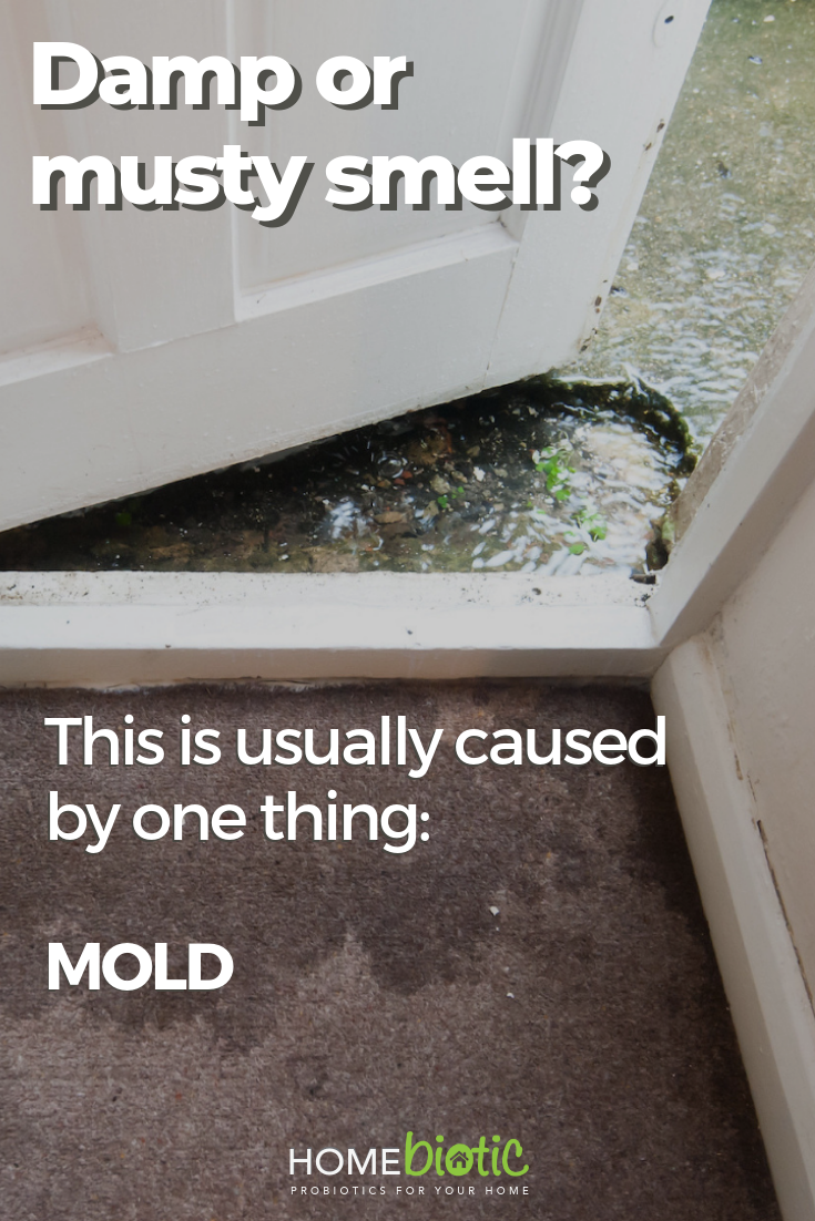 you may experience this just as a musty smell throughout the home or rh pinterest com