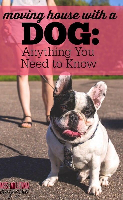 moving house with a dog anything you need to know the best of rh pinterest com