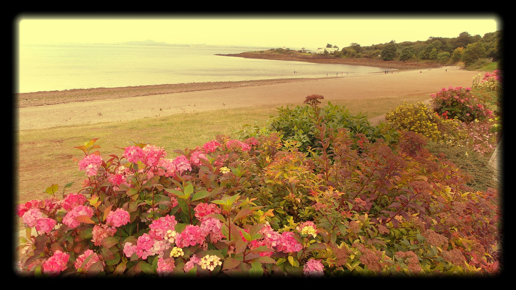 Garden bed with trees  Flower bed at Sliver Sands Beach in Aberdour Scotland  Sand beach
