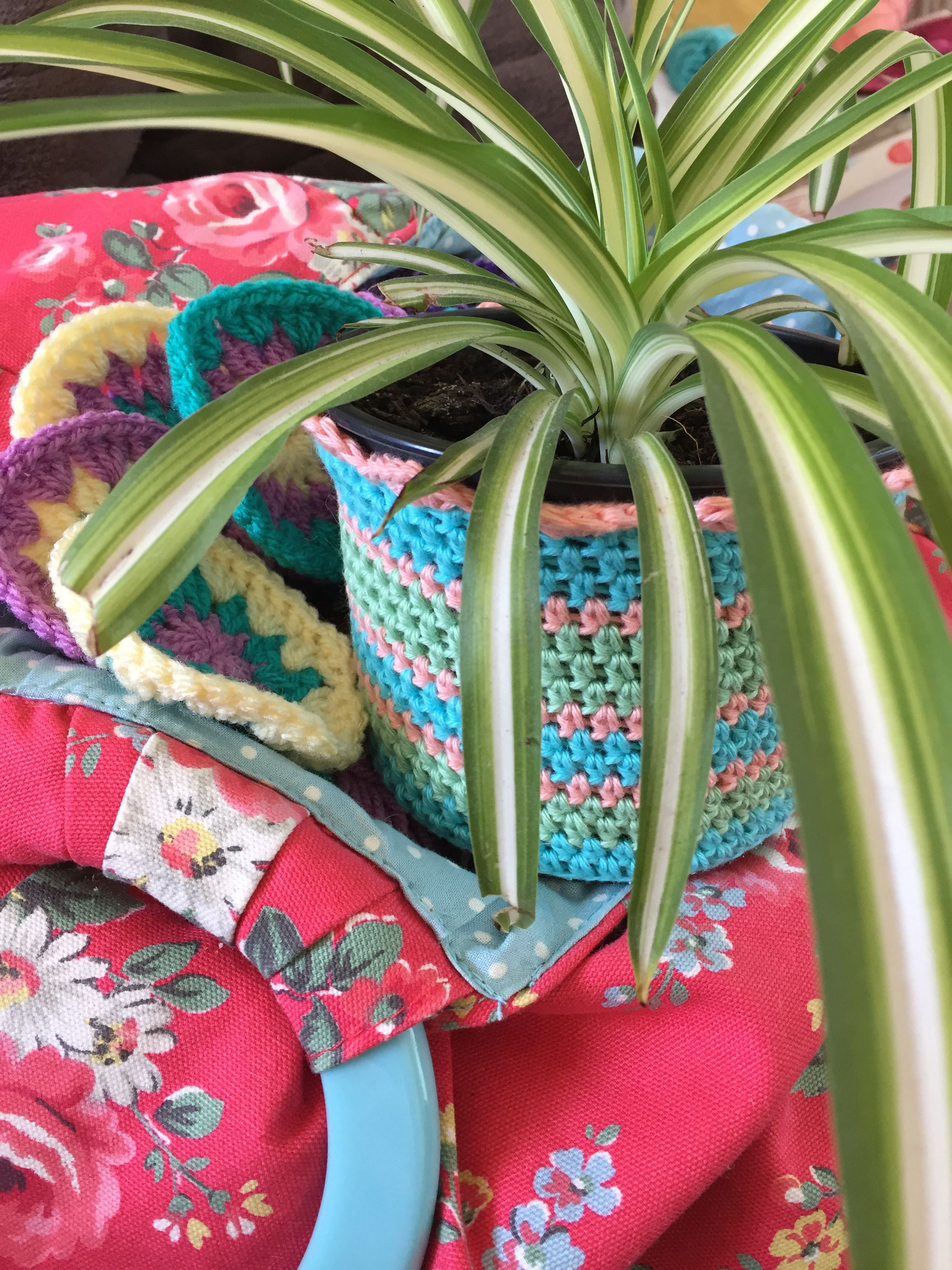 Mother's Day gift of a spider plant with a crochet cozy kizzcazz.etsy.com