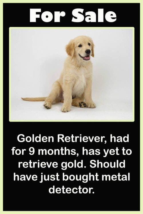 Golden Retriever For Sale Funny Pictures Funny Funny Animal