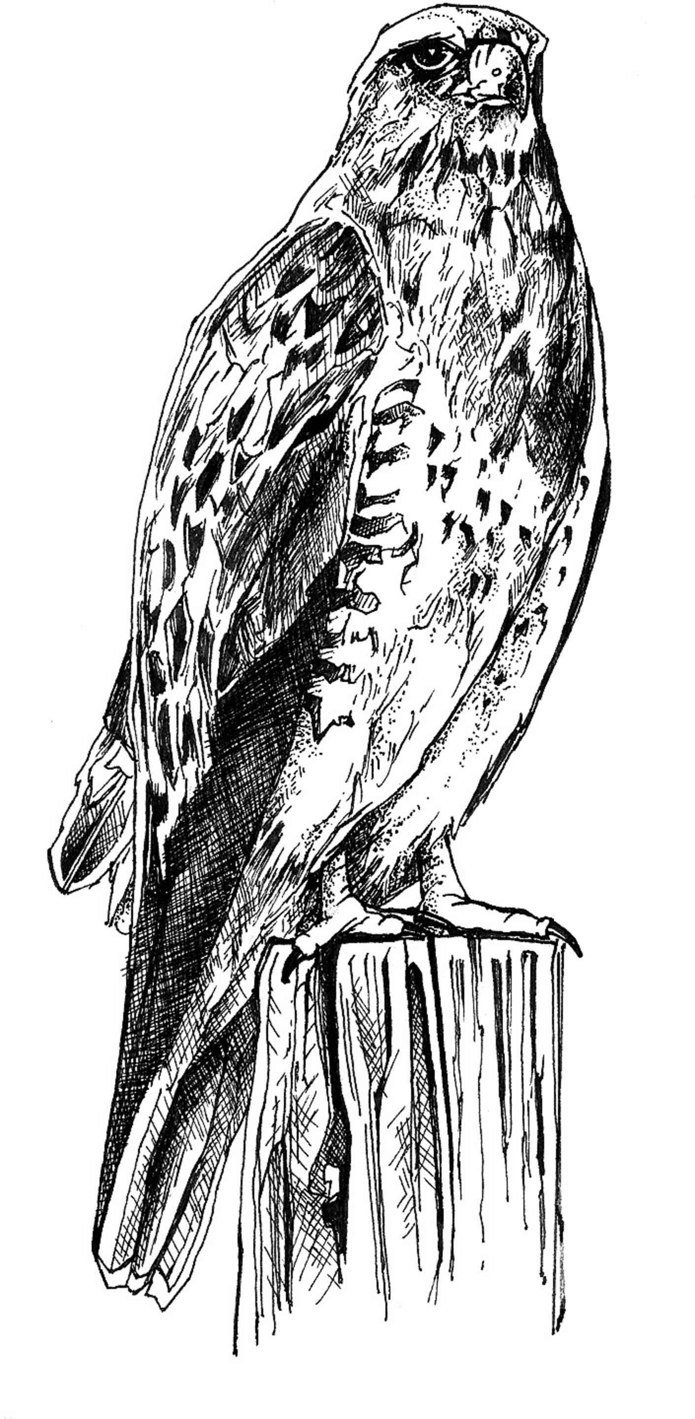 Sketches Of Animals And Birds Black And White