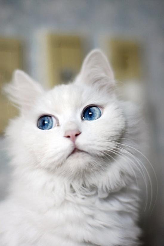 {<3} meow//