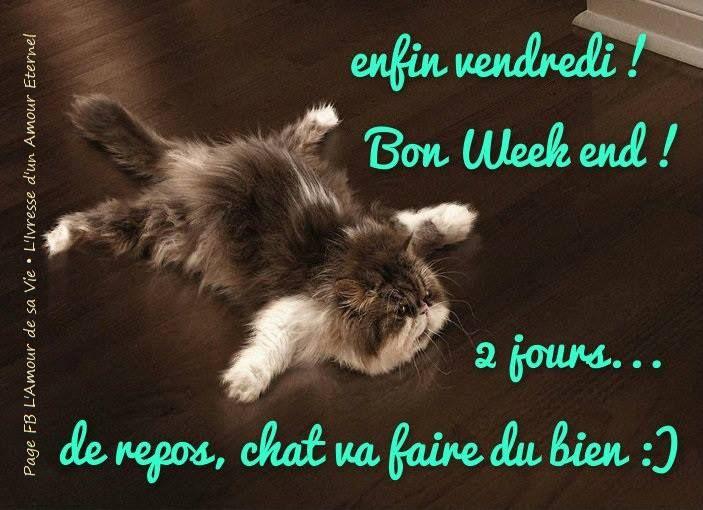 Enfin vendredi! Bon week end! 2 jours de repos, chat va faire du bien :) |  Chat fou, Animaux les plus mignons, Photo drole animaux
