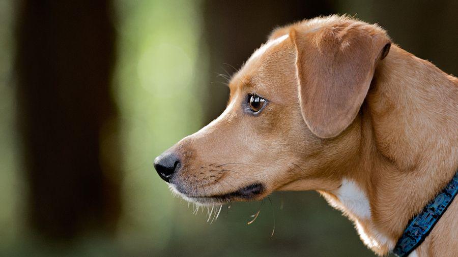 Pin on Victoria BC Dog Photographer Gord Rufh Dog