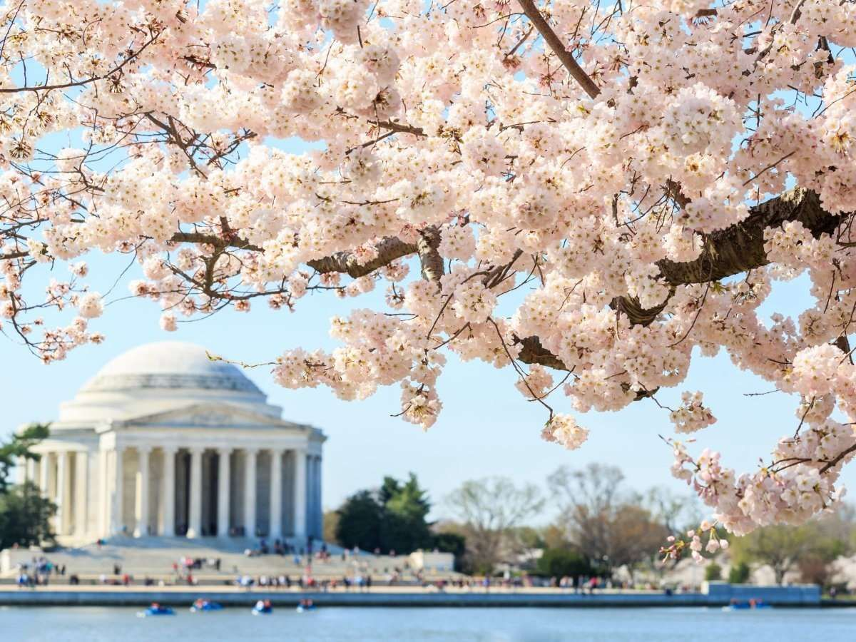 Visit Washington DC in spring when the
