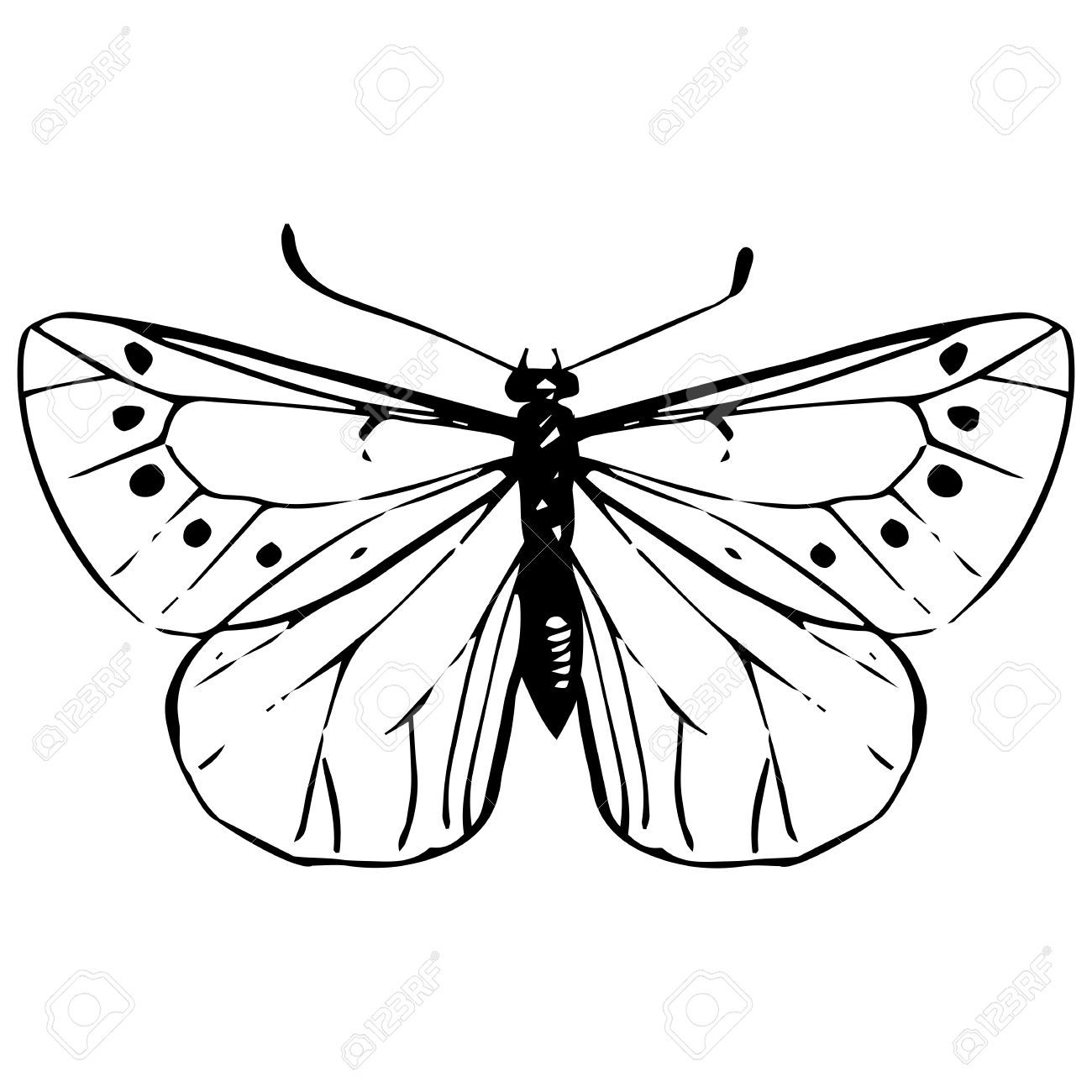 45503589-cabbage-moth-hand-drawn-butterfly-black-veined