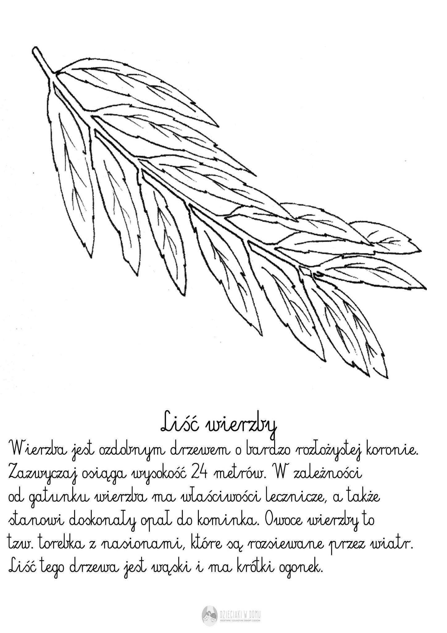 Liscie Drzew Szablony I Karty Pracy Szablony Druga Klasa Klasa W Przedszkolu