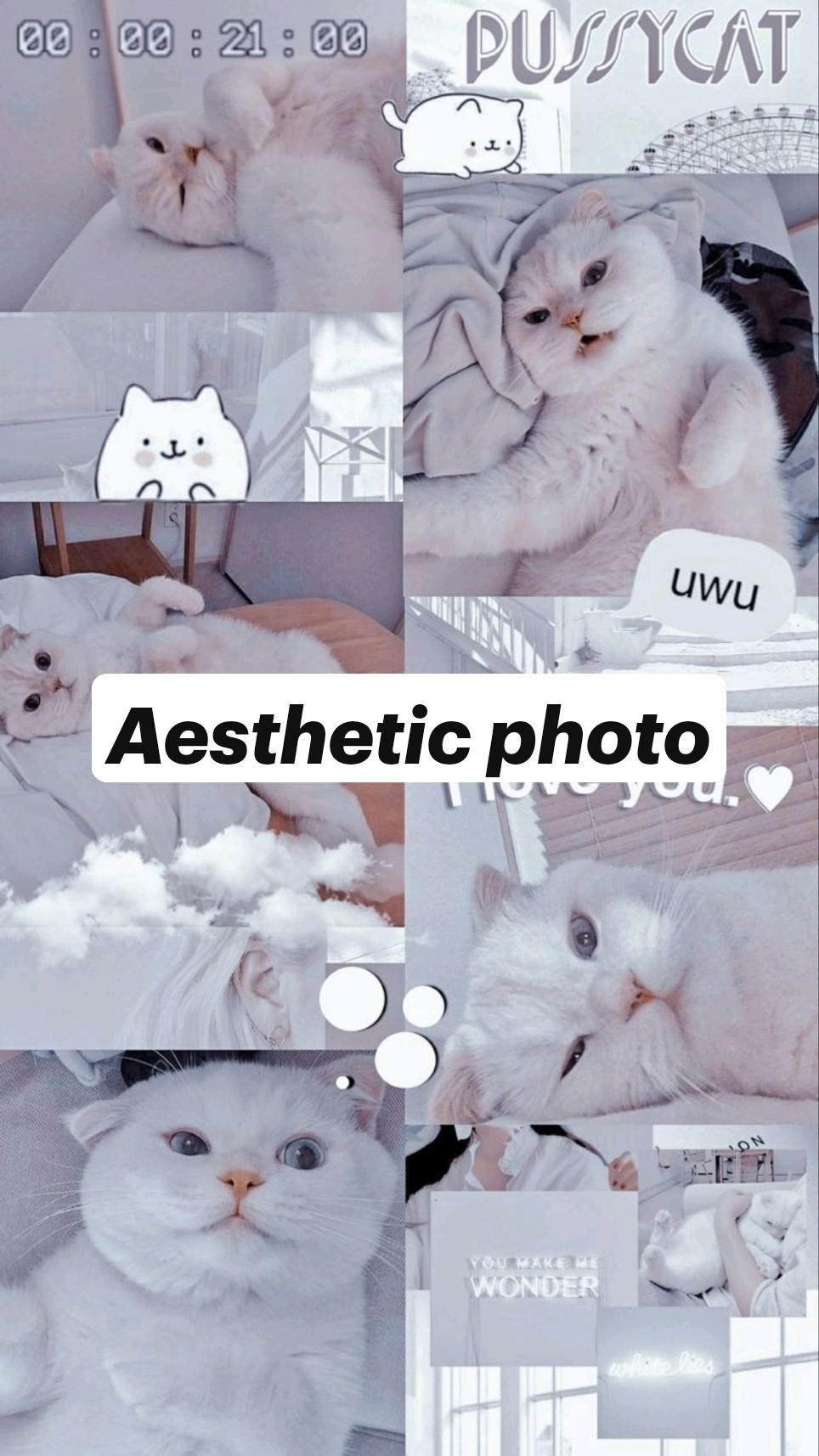 Aesthetic photo