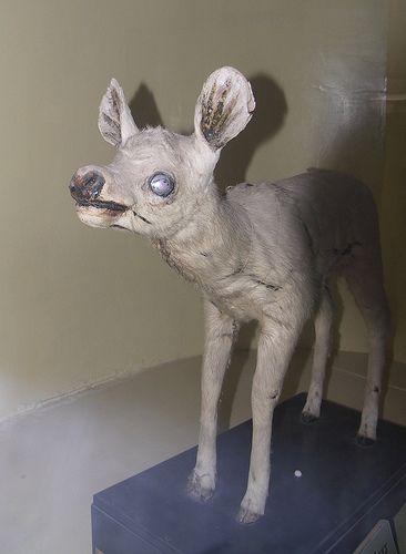 AAAHHHHH, ZOMBIE Deer