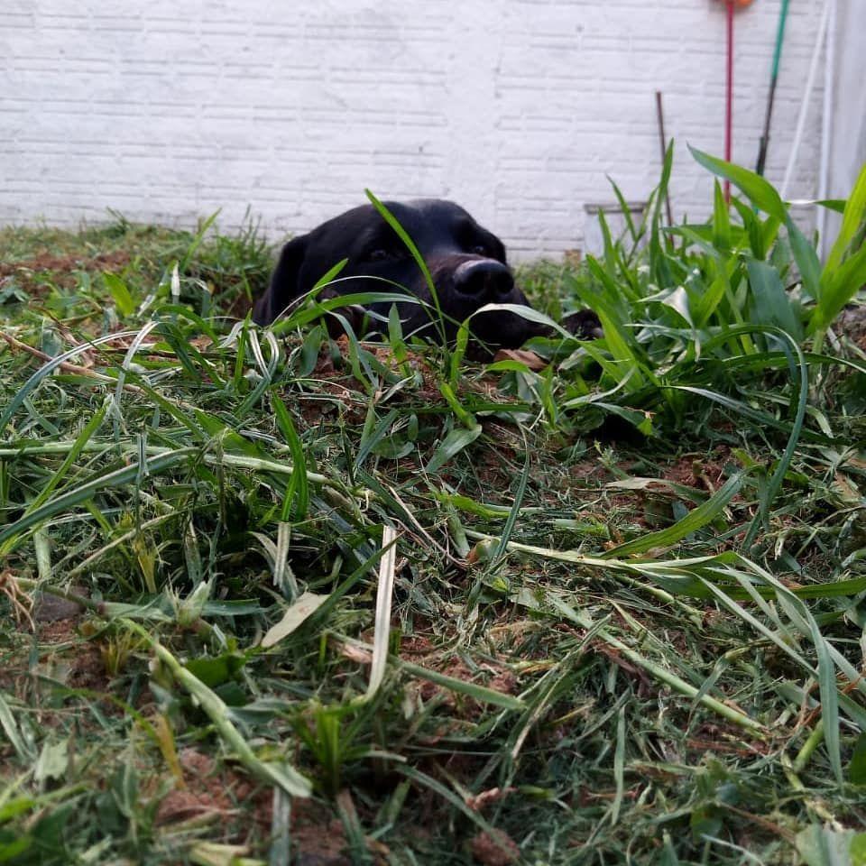 Get 3d Labrador Stikers Labrador Plants Garden