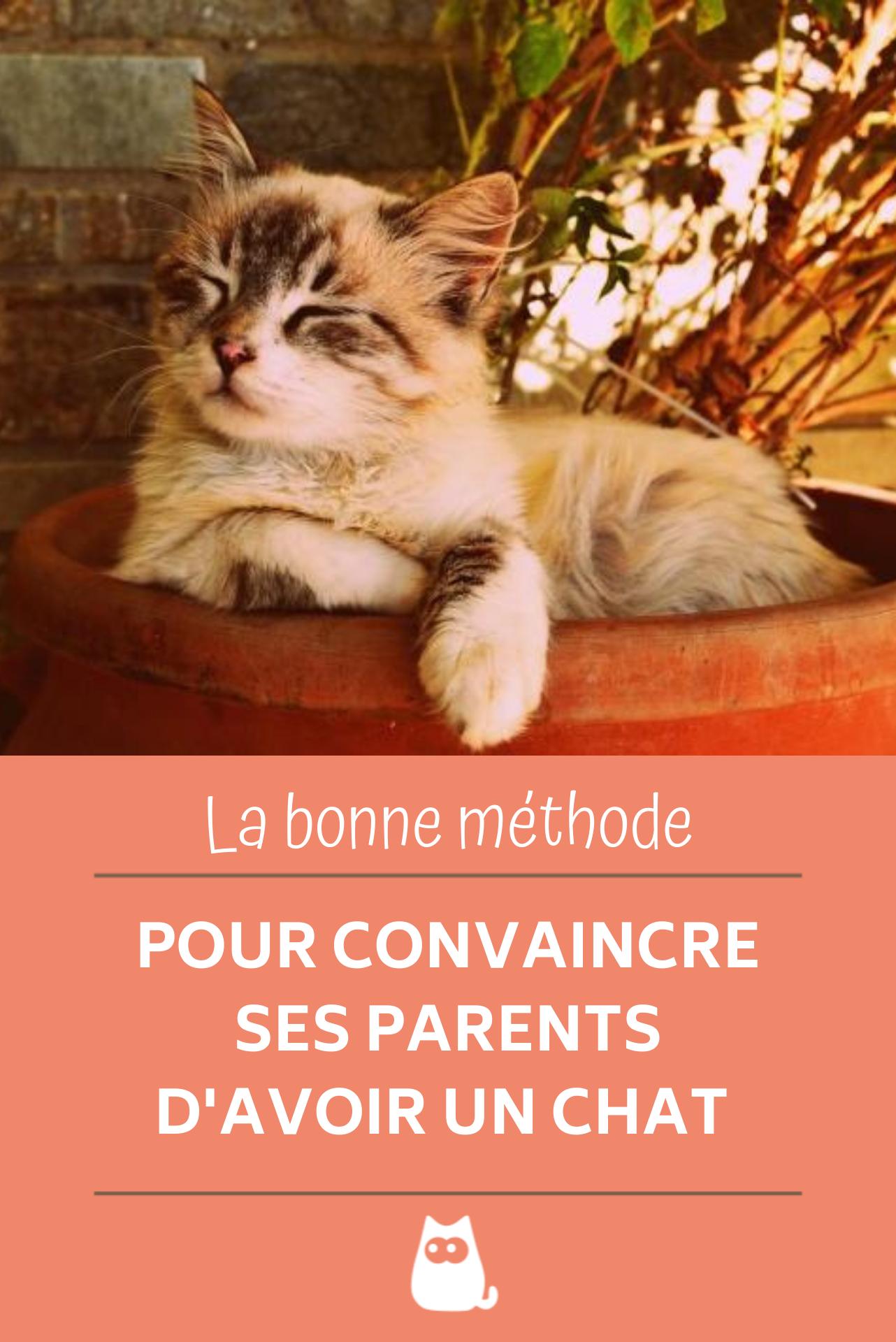 Comment Convaincre Ses Parents D Avoir Un Chat : comment, convaincre, parents, avoir, Comment, Convaincre, Parents, D'avoir, Chat,, Chats, Chatons,, Marrant