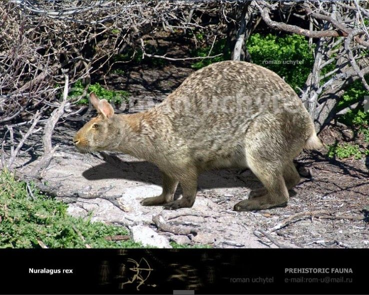 Nuralagus Rex A Prehistoric Bunny That Lived On The Island