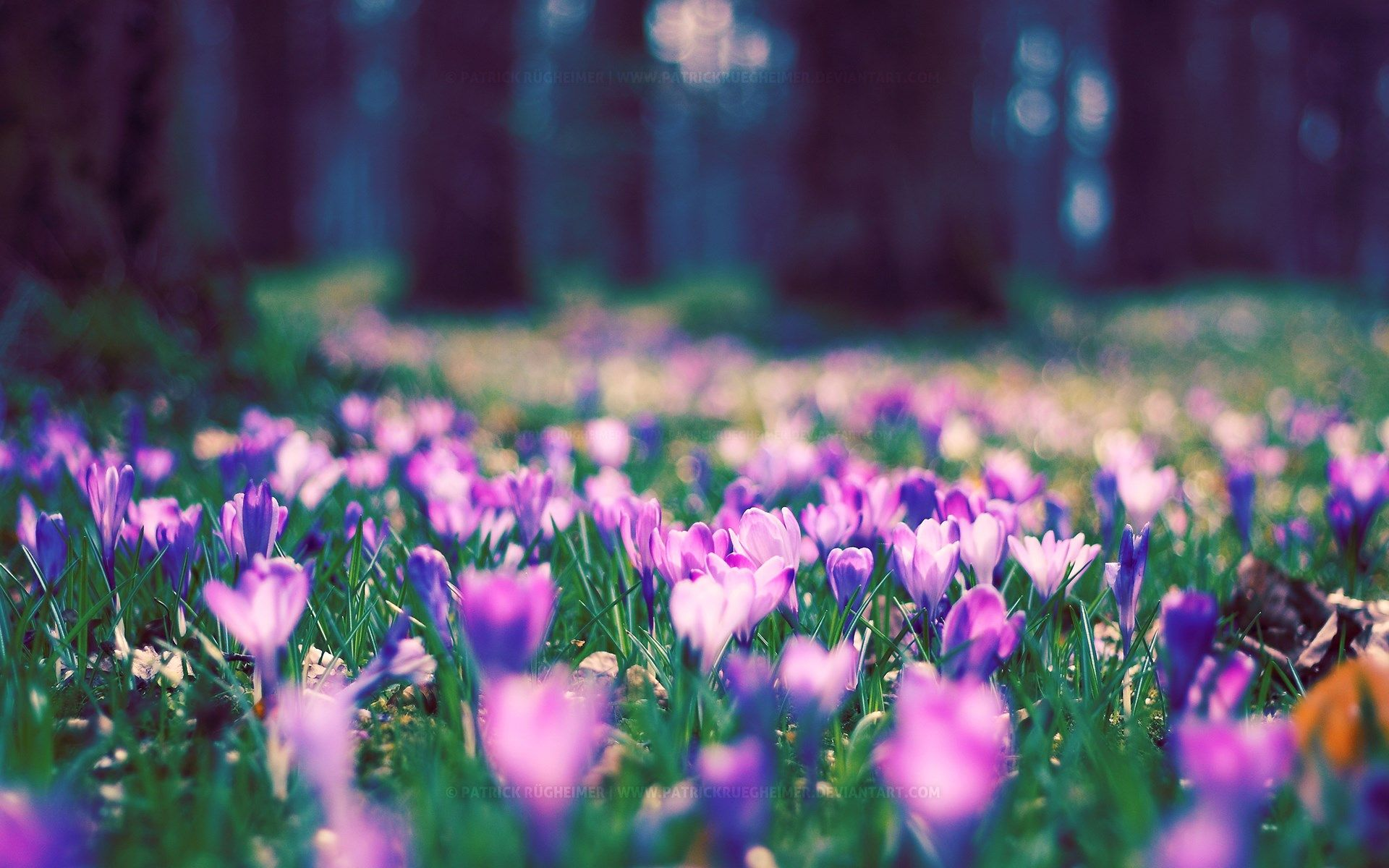 Free spring flowers wallpaper download ololoshka pinterest