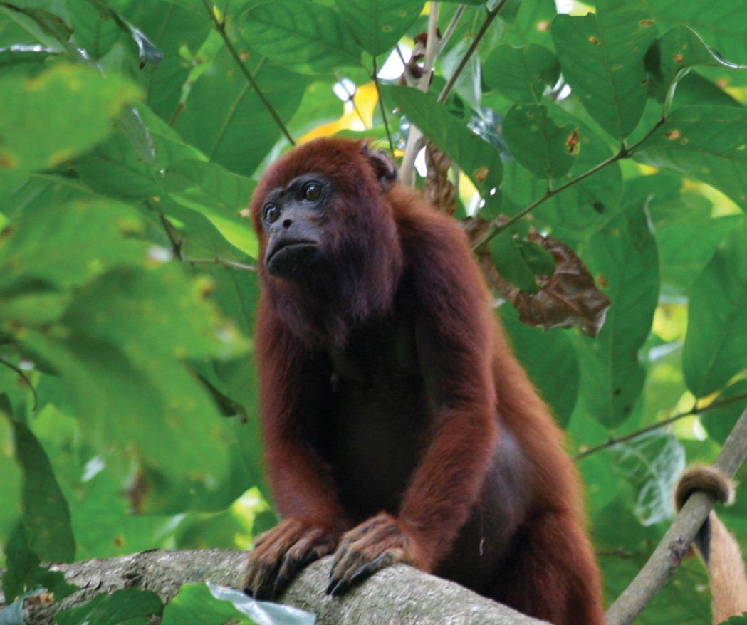 Nariva Swamp Visit Trinidad's east coast, trekking