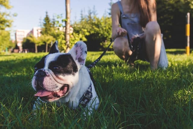 UNIQUE French Dog Names 170+ Sweet French Bulldog Names