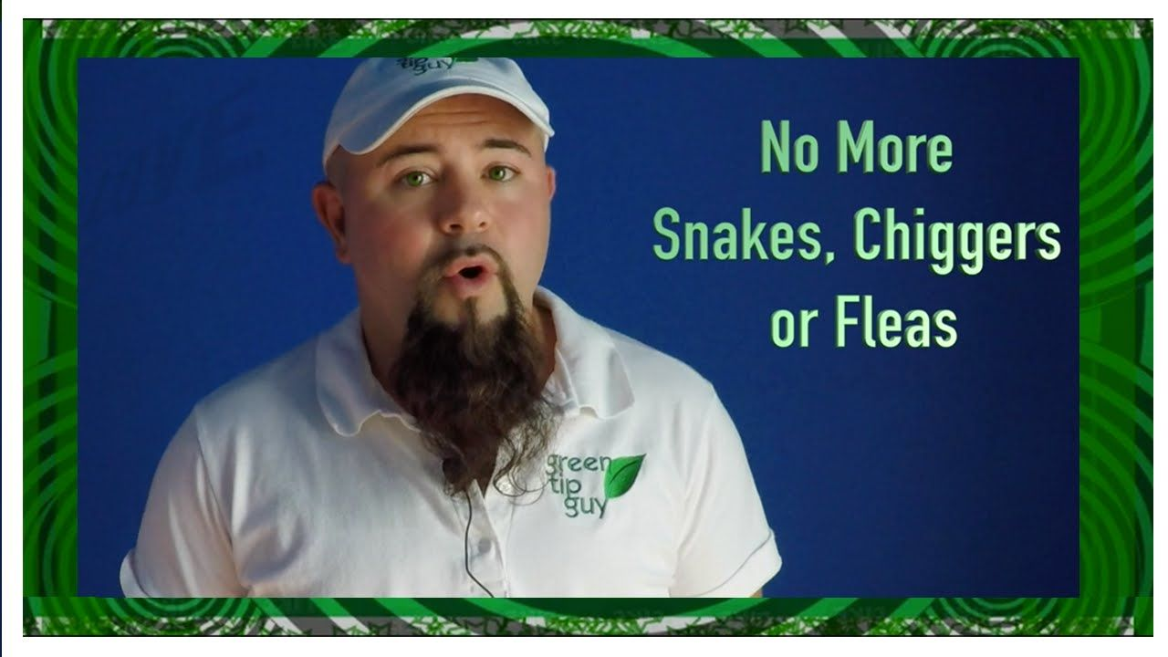 Rid Your Yard of Snakes, Chiggers & Fleas | Fleas, Green ...