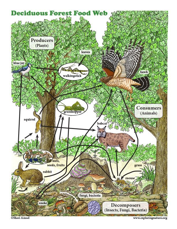 Learn about Food Webs on Learn about