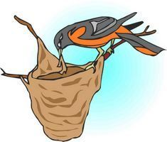 Homemade Oriole Food Nectar Attracting Orioles Nectar Recipe Orioles Oriole Food Recipe