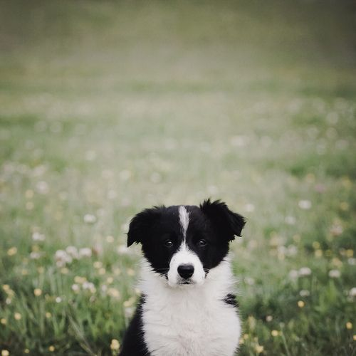 So Cute With Images Baby Dogs Dogs Dog Love