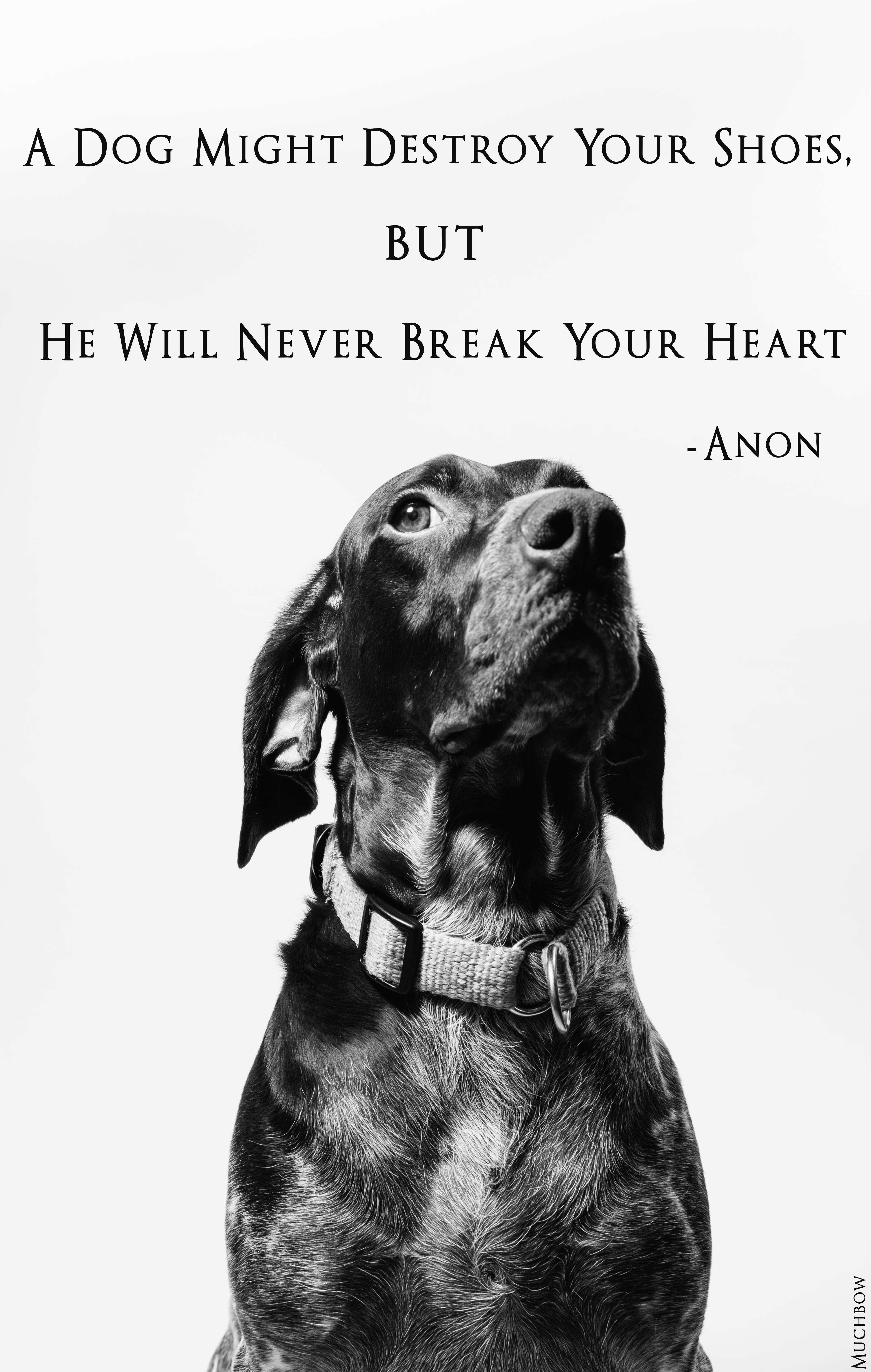 A Dog Might Destroy Your Shoes But He Will Never Break Your Heart Anonymous 3987x6280 Oc Deaf Dog Dog Sign Language Easiest Dogs To Train