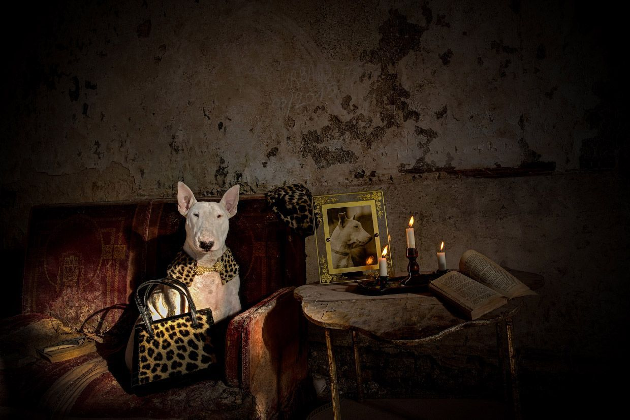 Claire a Bull Terrier and His Owner Alice van Kempen Explore Abandoned and Mysterious Places Across Europe, http://itcolossal.com/dog-abandoned-places-europe/