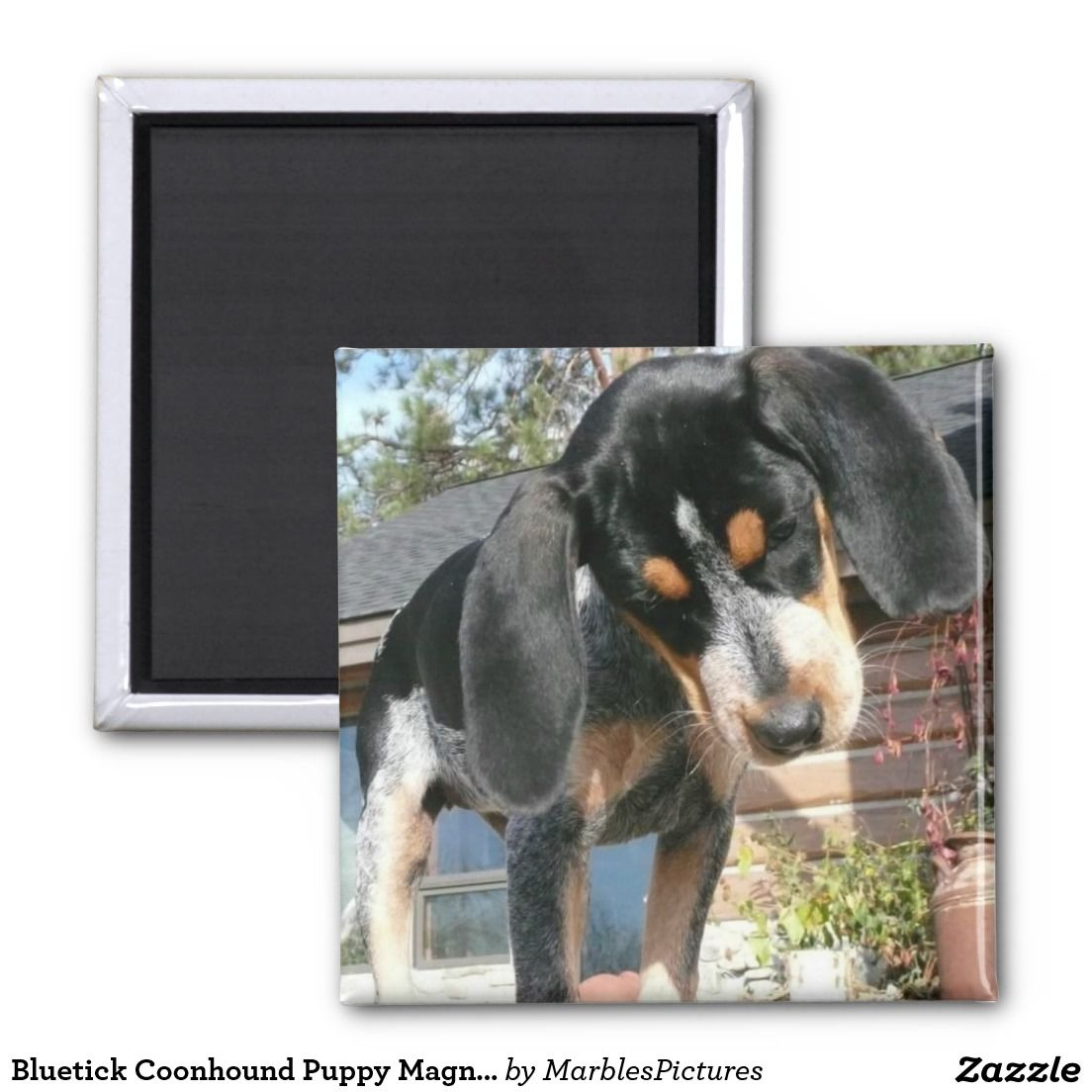 Bluetick coonhound puppy with images