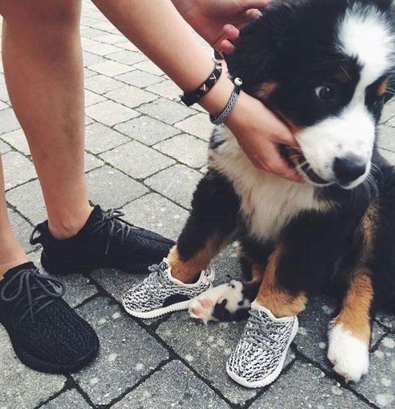 Nachwelt Taxi Kaliber puppy shoes adidas Log Mangel Aspekt