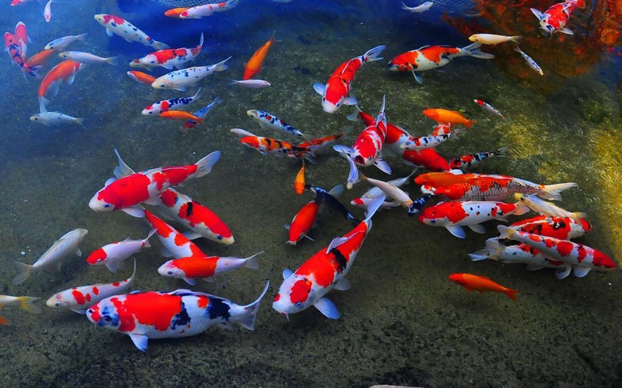 продажа аквариумных рыбок ладожская