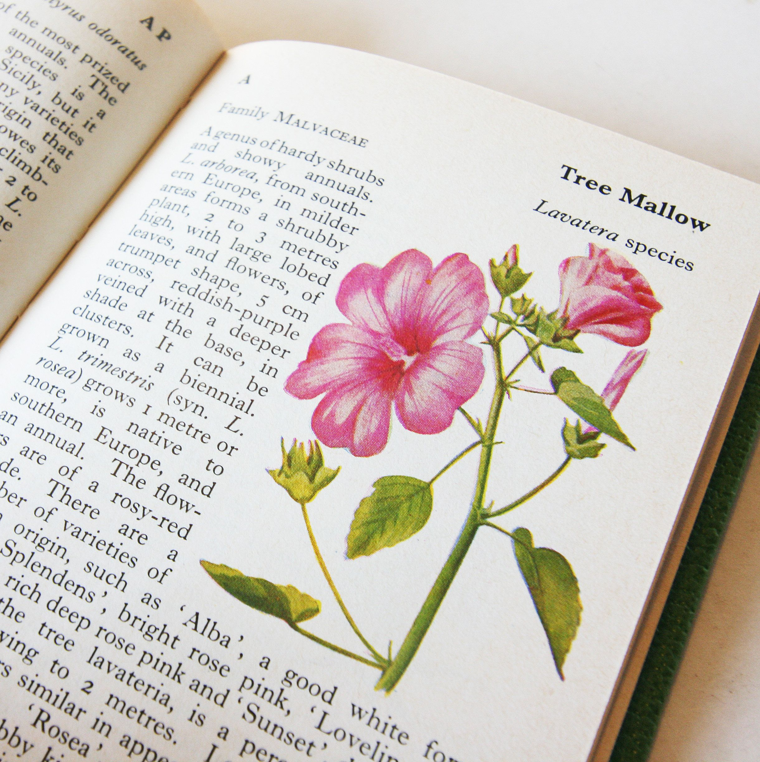 Vintage Garden Flowers 1960s Illustrated Plants Flower Picture Book Flowers Guide Old Retro Book Flowers Flower Pictures Plant Illustration