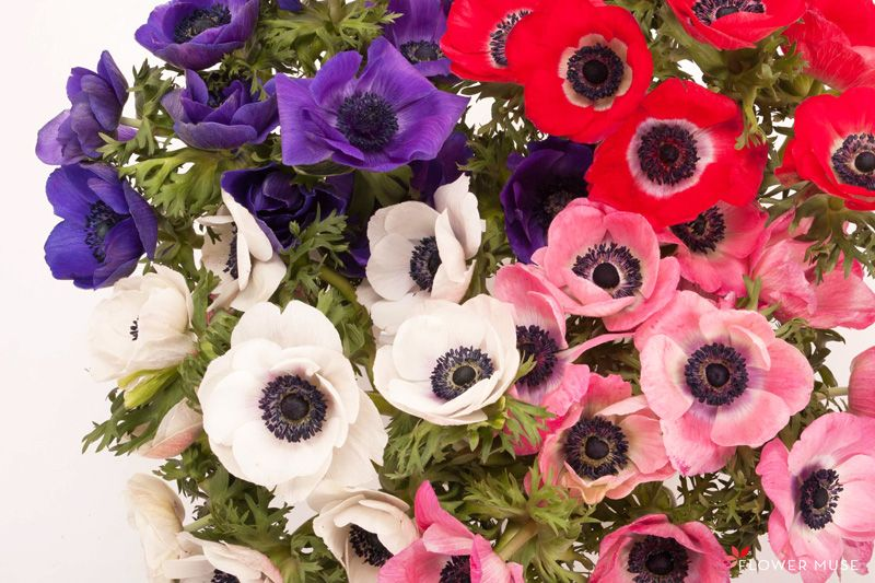 Anemone Flowers Care And Handling Flower Muse Blog Flower Care Anemone Flower Ranunculus Flowers