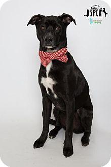 Jefferson La Labrador Retriever Mix Meet Duncan Graduate Of Doggone Express Training A Dog For Adopti Dog Adoption Labrador Retriever Mix Kitten Adoption