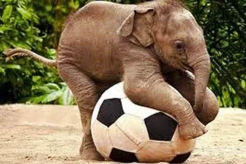 Unduh 88 Koleksi Gambar Binatang Lucu Gajah Paling Lucu