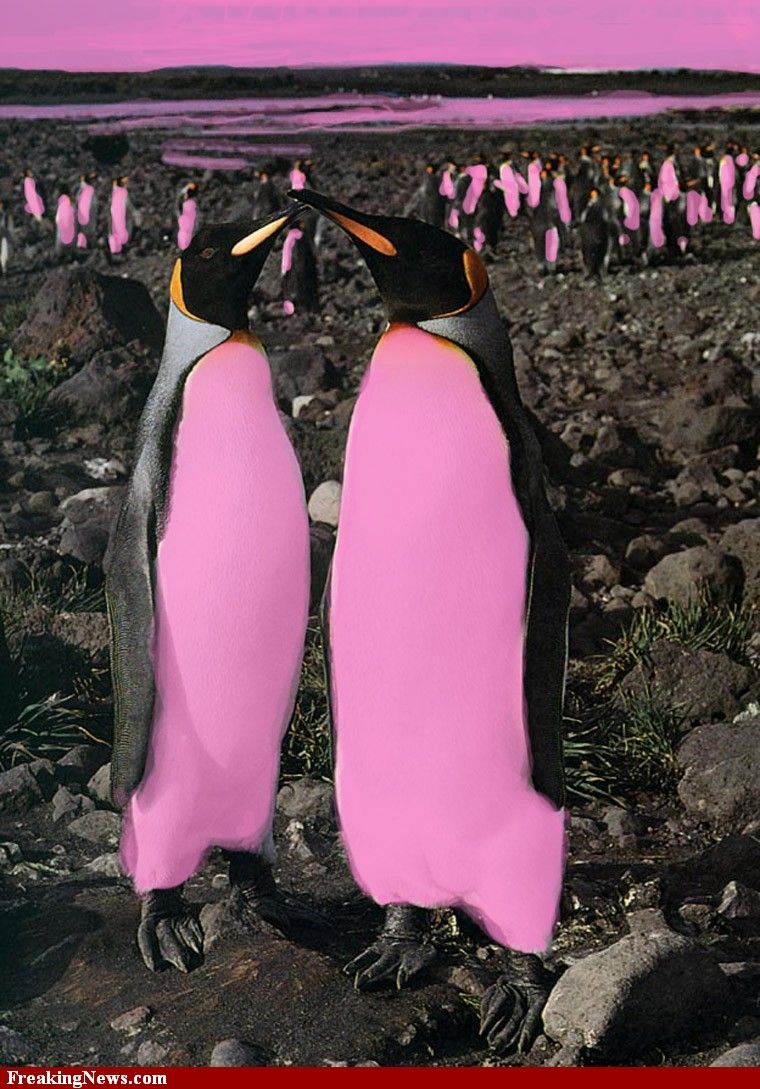 Penguin candy pink Small Pink