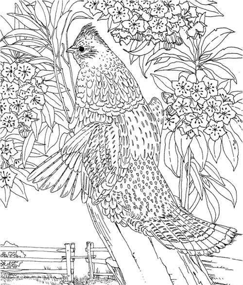japanese garden coloring pages - photo #27