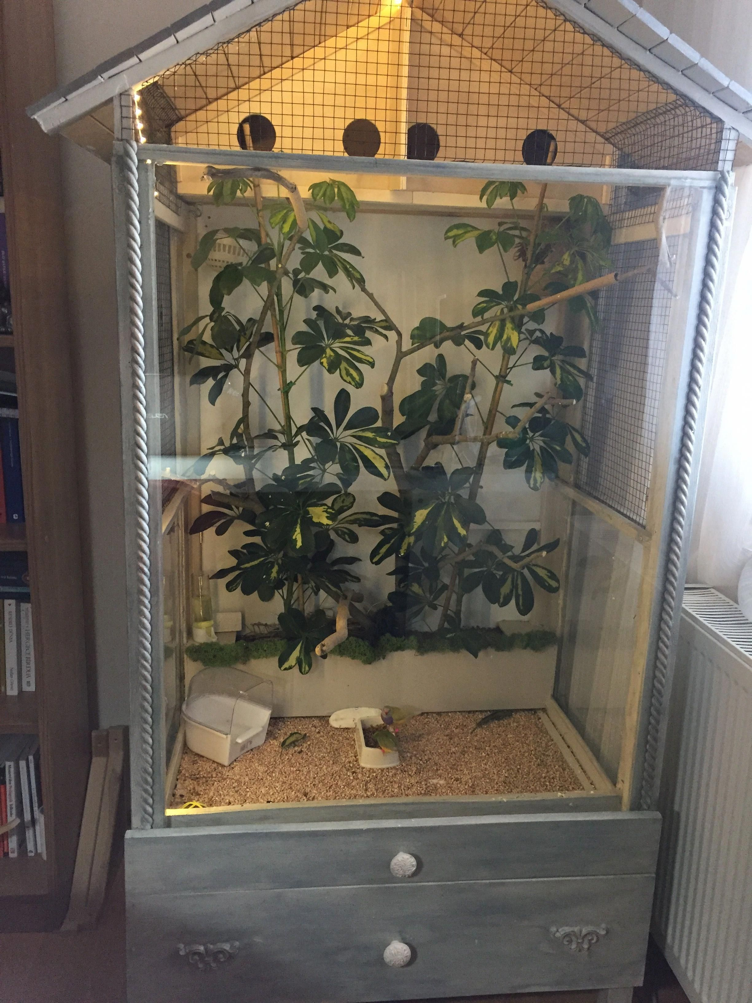 My Indoor Aviary For My Gouldian Finches Diy Project Diy Bird