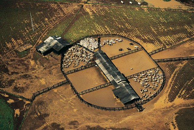 Enclosure of cattle close to Cacères, Mato Grosso, Brazil