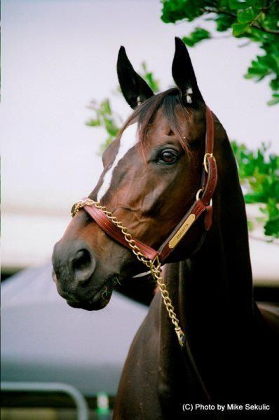 (foaled April 1, 2004 in Kentucky) is a retired American champion Thoroughbred racehorse, winner of 19 consecutive races in a 20-race career.  American Horse of the Year (2010) Queen of Racing ????