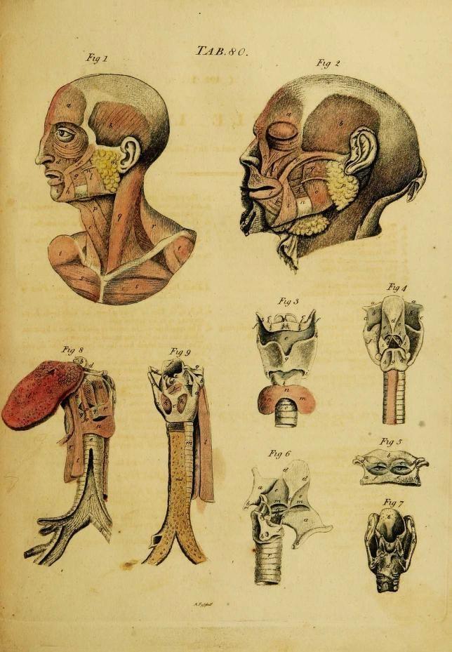 Pin by Katelyn Schaffer on Anatomy & Physiology | Pinterest