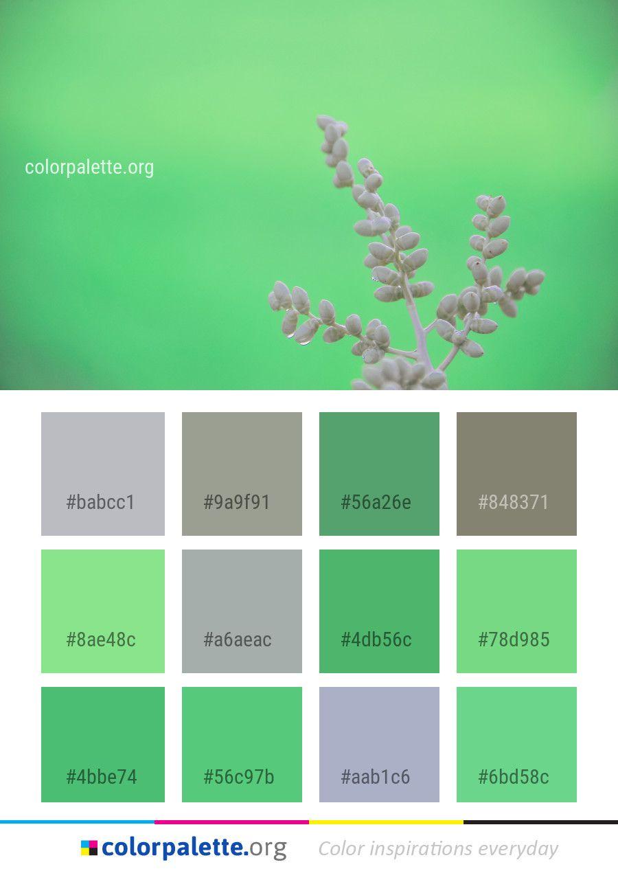 green flower flora color palette color palettes pinterest rh pinterest fr