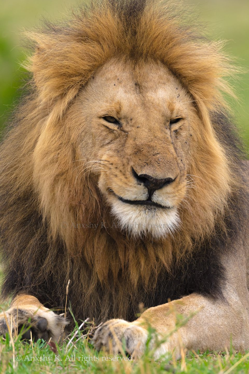 How You Doin By Anxshy K 2017 National Geographic Nature Photographer Of The Year National Geographic Animals Animals Wild Majestic Animals