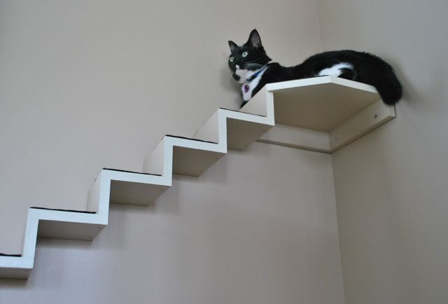 cat staircase catification pinterest cat cat stairs and jackson galaxy. Black Bedroom Furniture Sets. Home Design Ideas