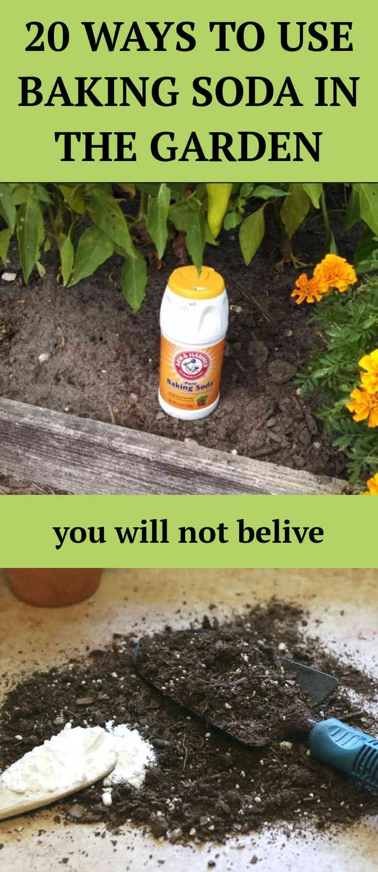 20 Great Ways to Use Baking Soda in the Garden Growing