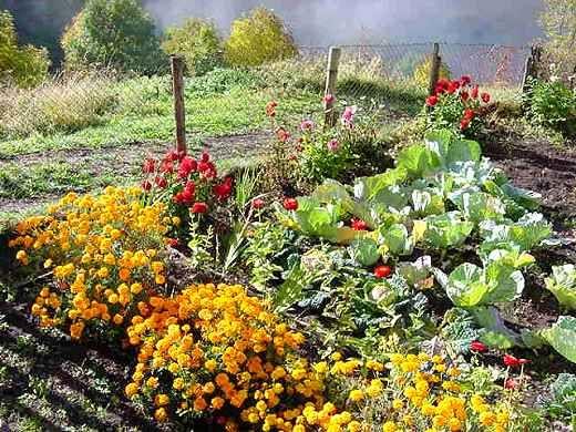 Pin by annarita petrini on in the garden orto for Decorazioni giardino aiuole