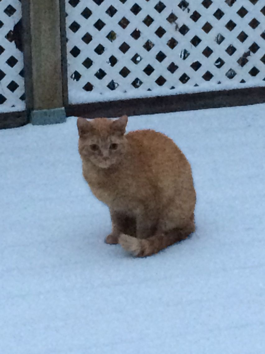 Sitting in the snow #cats #cold lake