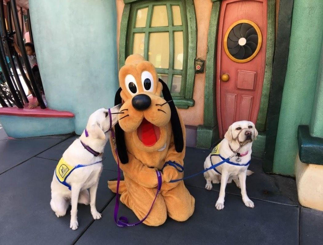 Bucket List Take Picture With Pluto Service Dogs Disney