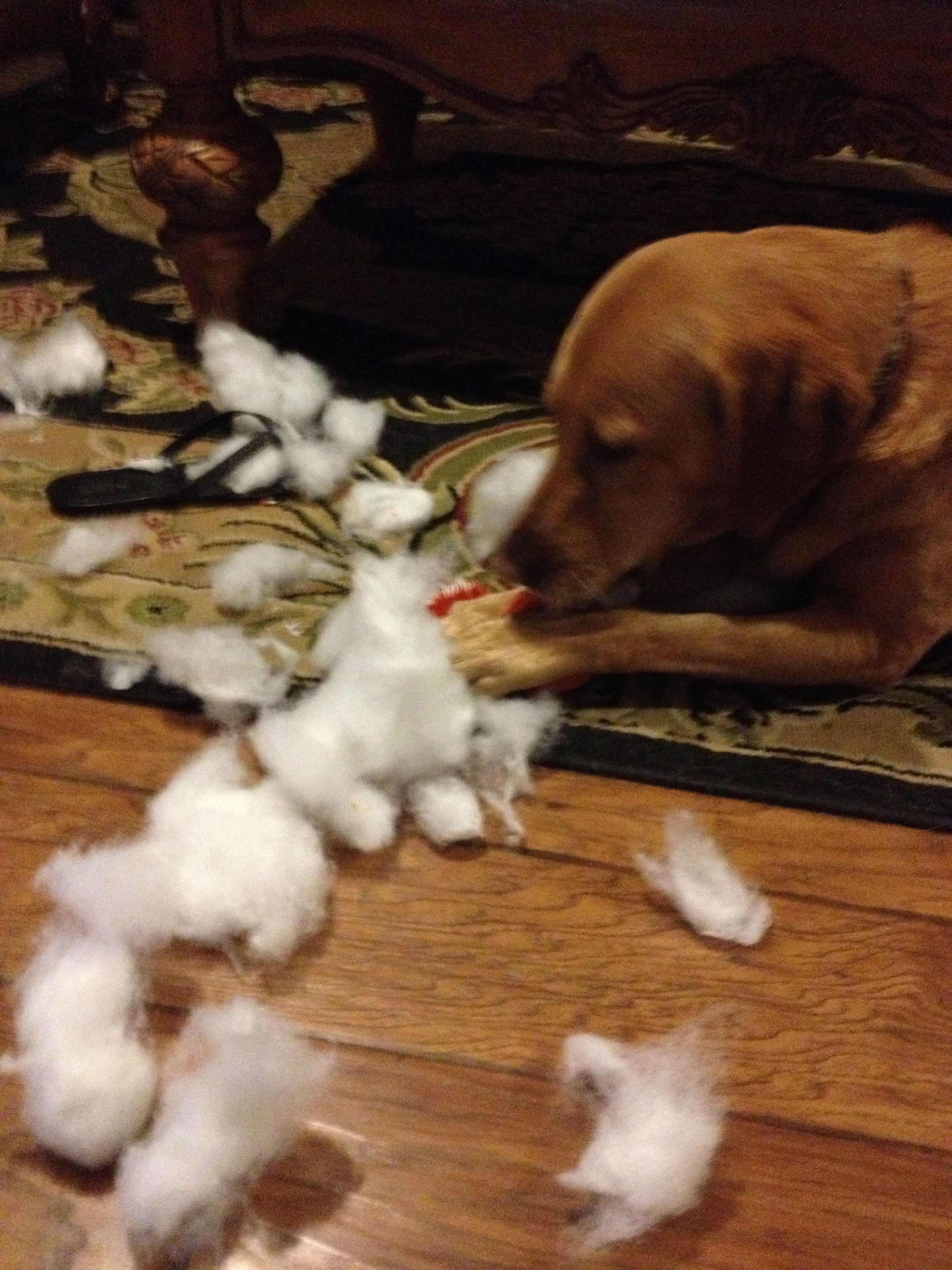 Abby S Favorite Expensive Dog Toys That Last About Five Minutes