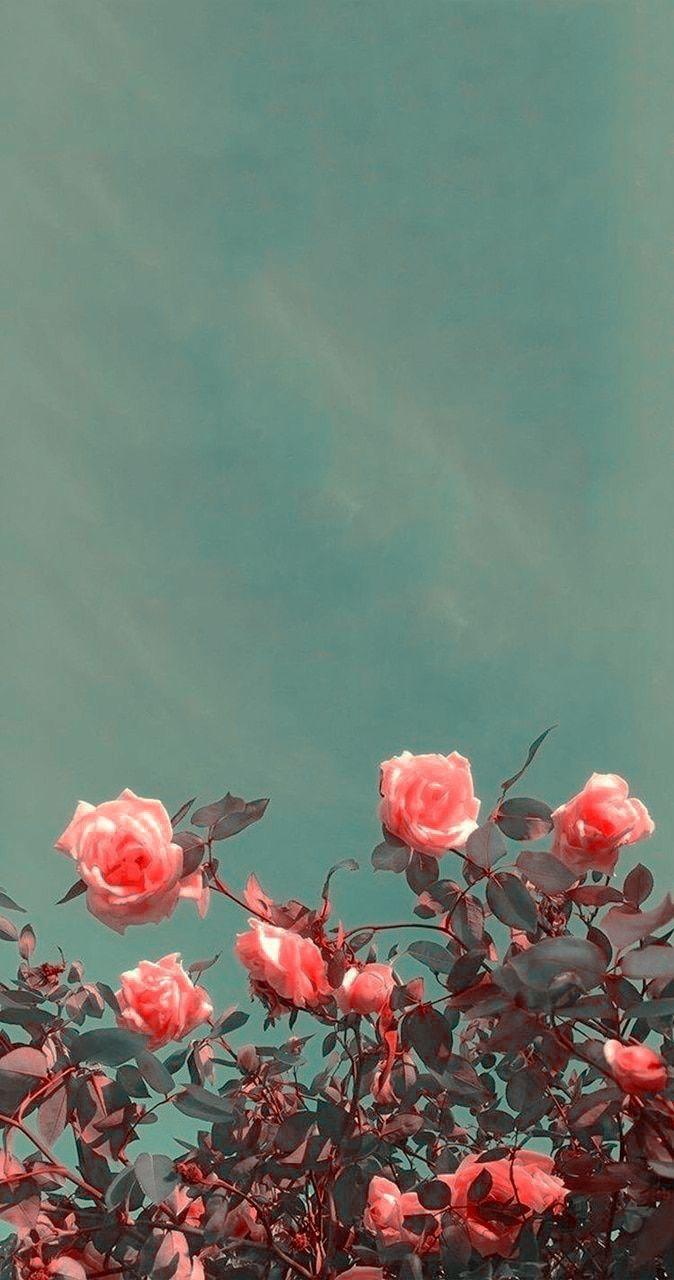 Lookscren; Flower uploaded by @Xscarxxtie on We He