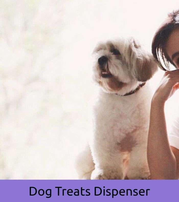 Funny Dog You\'ve Been Framed | Little Dog Tattoo | Pinterest | Dog ...