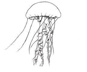 How To Draw A Jelly Fish is part of Jellyfish drawing, Fish drawings, Drawings, Fish art, Art, Pencil drawings - Today we will be learning how to draw a jellyfish  I always thought that a jellyfish was nothing but a simple blob  I didn't realized how many parts there are to a jellyfish, until I tried to draw one! Let's get started  What you'll need HB (2) Pencil, 4B pencil Eraser Drawing paper Drawing surface …